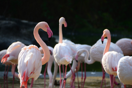 many colorful flamingos in the sun at the zoo photo