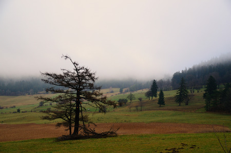 broken big tree and forest in the dense fog photo