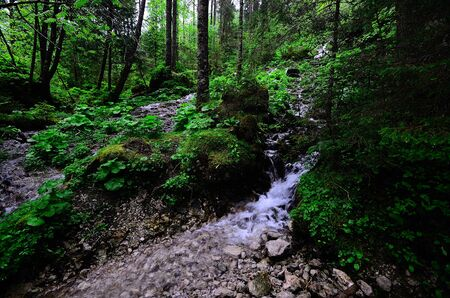 trickles: water trickles from the forested slope through the forest