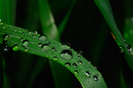 refreshes: large raindrop on a green leaf Stock Photo