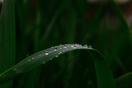 refreshes: many drops on a leaf after rain