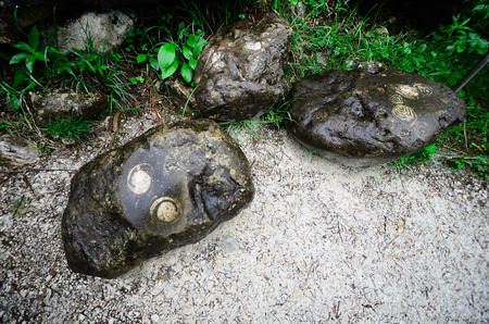 fossilized: large rocks with fossilized snails in the mountains