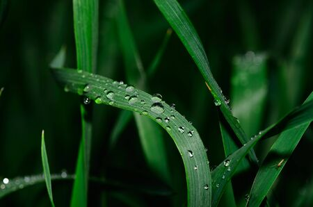 refreshes: raindrops on green plants on field Stock Photo