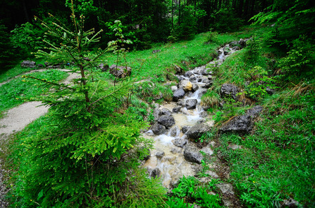 green nature: small mountain stream in green nature