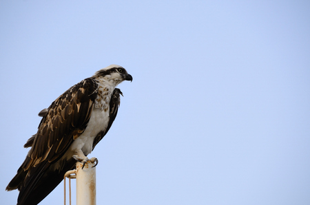 sittting: large sea eagle sittting at the beach and looks