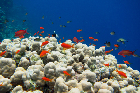 salt water fish: small colorful fish in the blue sea