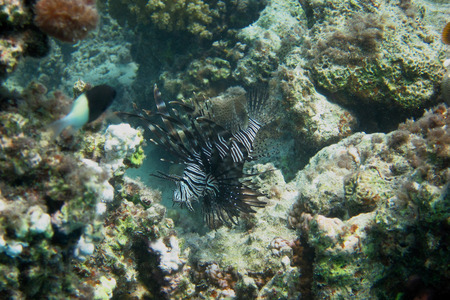 radiance: radiance radiant on the reef in the Red Sea Stock Photo