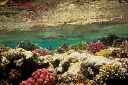 farbe: many colorful coral under the water surface