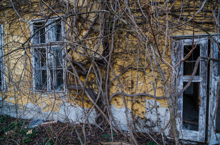 going places: overgrown old building