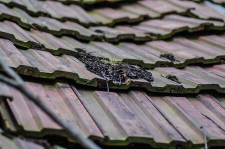 going places: broken roof on an old house
