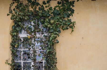 going places: many plants growing on wall and window Stock Photo