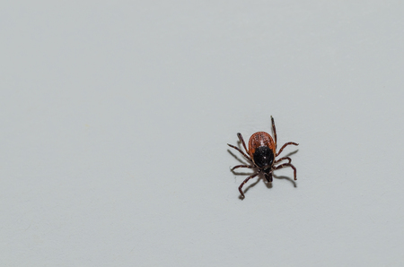 tick view from above on white background Stock Photo
