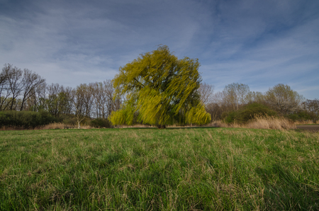 tannenbaum: big tree on a green meadow