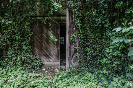 overgrown: overgrown wooden gate of old castle Stock Photo