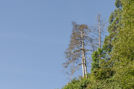 tree in forest and blue sky