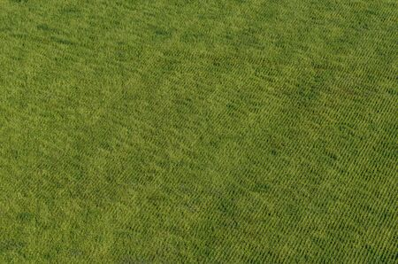 beautiful green field in summer