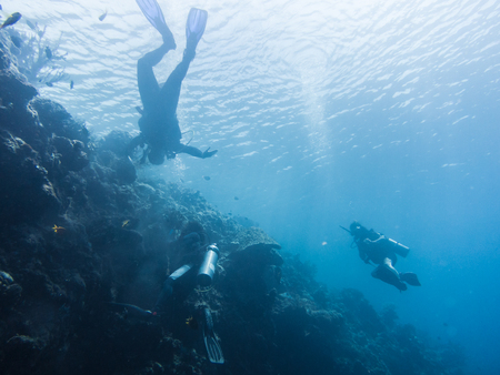 snorkelers: snorkelers and divers in the blue sea