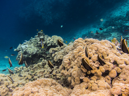 freediving: coral and many fish on the reef Stock Photo
