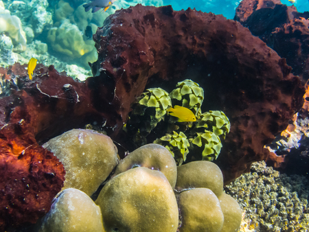 freediving: colorful coral and plants in the sea