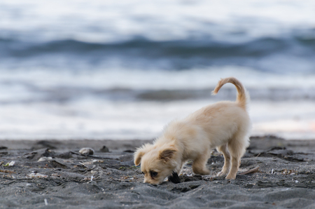 small white dog on sand beach and sea