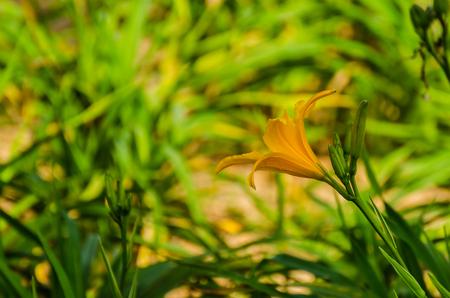 orange blossom in the jungle in bali