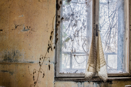window and plants in abandoned house