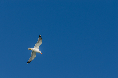 seagull on blue sky and sea on vacation Stock Photo