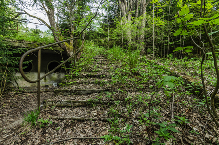 overgrown stairs in a swimming bath in the forest Stock Photo