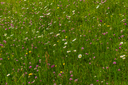 different flowers in the fresh grass on a mountain