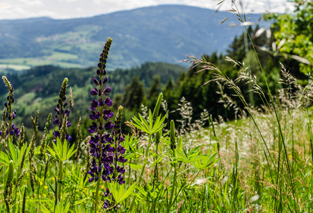 different plants in nature on a mountain Stock Photo