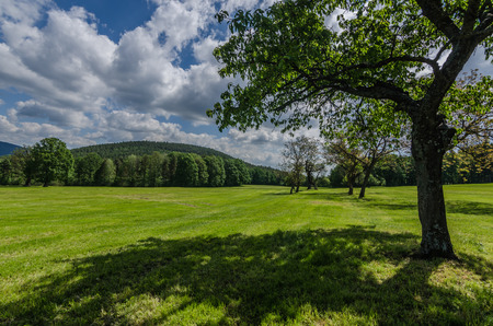 Tree and green landscape in spring Stock Photo