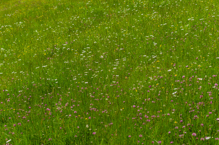 fresh grass and many flowers in spring Stock Photo