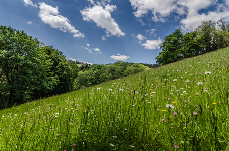 fresh grass on a mountain in the spring