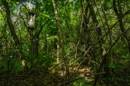old broken lantern in the forest