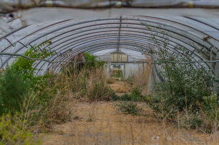 overgrown old arched greenhouse with plastic sheets Imagens