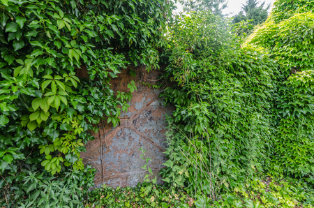 Overgrown iron door on a plot with old house