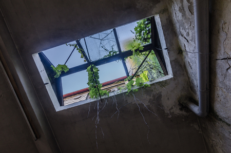 Window in an abandoned factory with plants