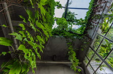 Hanging plants on the roof of an abandoned factory