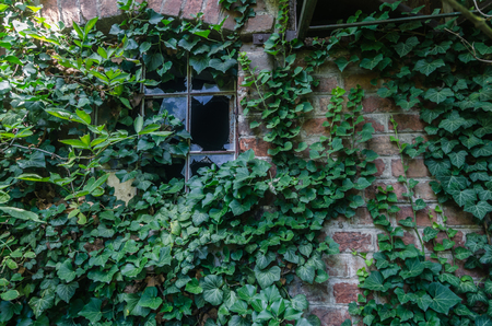 overgrown factory wall with plants