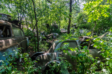 many abandoned cars between trees 스톡 콘텐츠