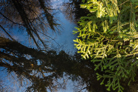 Reflection stream with trees and sky Stock Photo