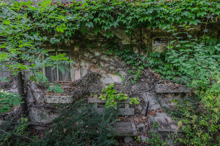 Overgrown facade of an old house Imagens
