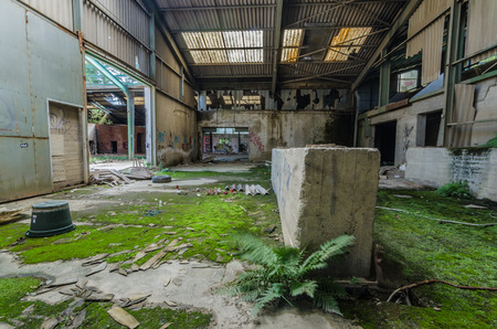 abandoned factory building with fern and moss