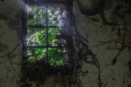 overgrown window with plants in a house