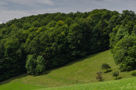 green nature in spring while hiking