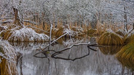 iced marshland in winter with snow