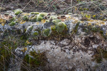 green moss on rock in nature