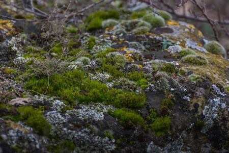 different moss on a rock in the nature Stok Fotoğraf