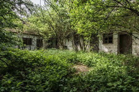 overgrown courtyard of an abandoned farmhouse