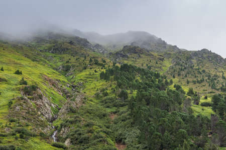 green mountains and dense fog in the summer